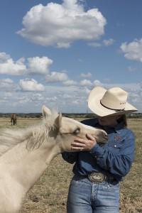 quarter-horse-746979_1280