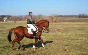 stockvault-a-horse-and-a-jockey142175 copy