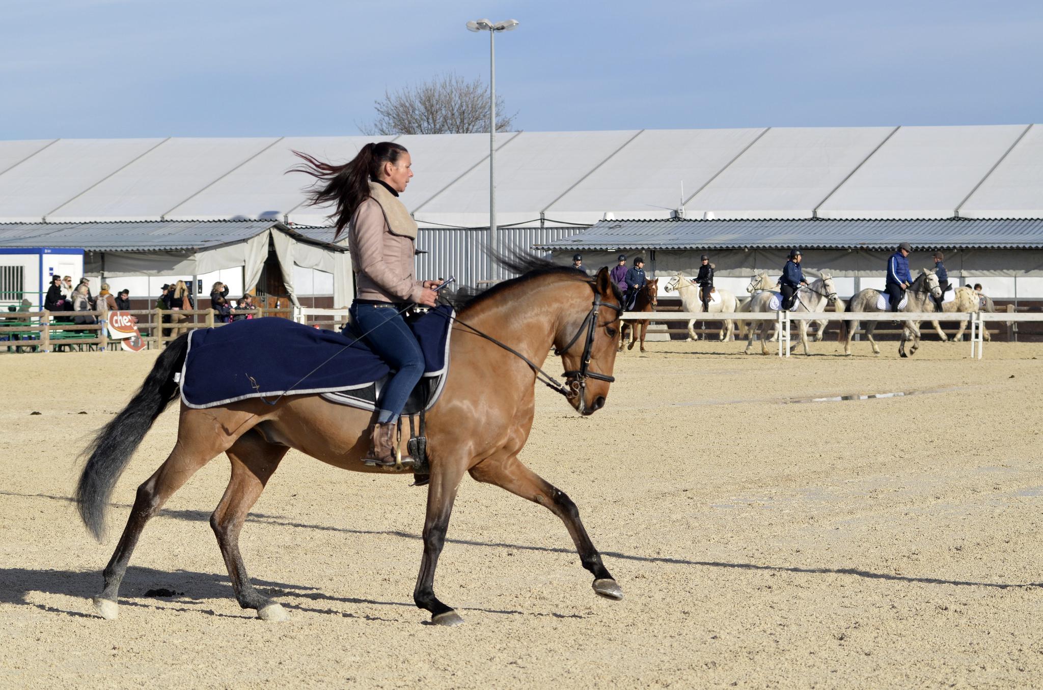Un cheval au travai a des besoins de production plus importants