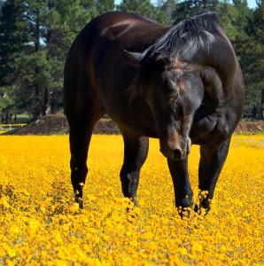 horse-419156_960_720
