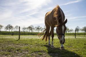 horse-742427_960_720