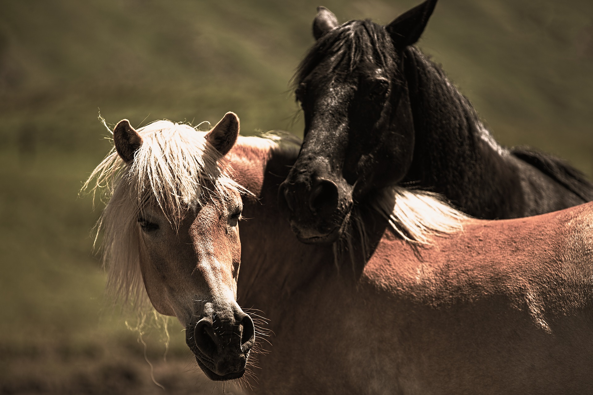 play-horses-853894_1920