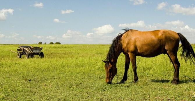 alimentation du cheval
