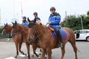 chevaux garde républicaine