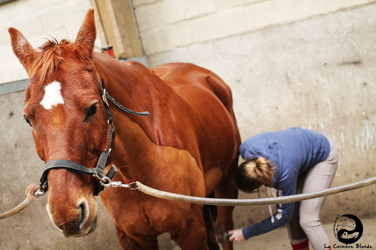 prendre un cheval en demi-pension