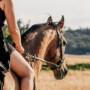 acheter un cheval : les formalités à suivre