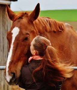 horse-1333897_1920