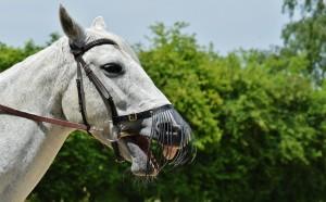 horse-1424064_1920
