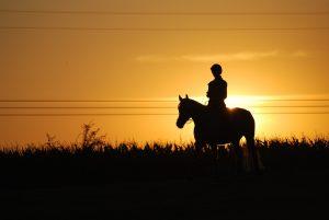 cheval-confiance-balade