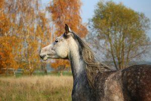 cheval-confiance-libre