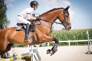 cheval-confiance-saut