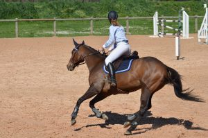 cheval-parcours-cso
