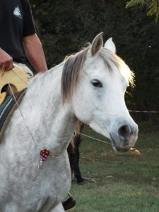 cheval-sans-mors