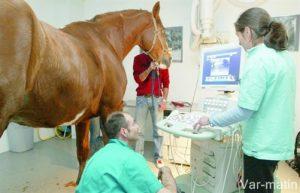 La visite vétérinaire d'achat
