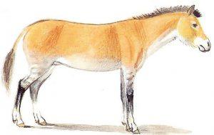 Evolution du cheval : le Merychippus