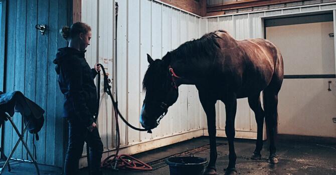 mon cheval à la maison : les installations