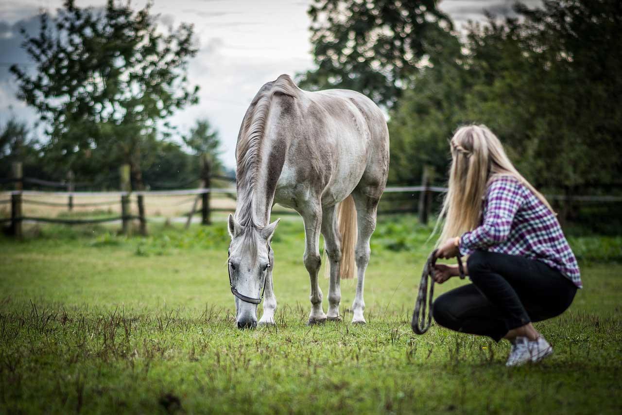 Règles de sécurité à cheval