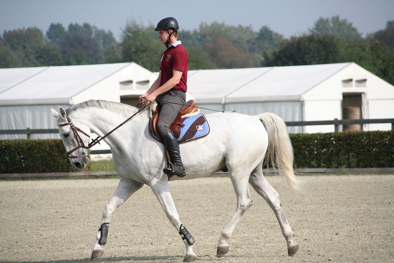 Assouplir son cheval : pourquoi et comment faire ?