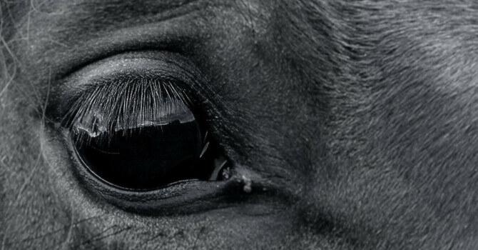 uvéite cheval