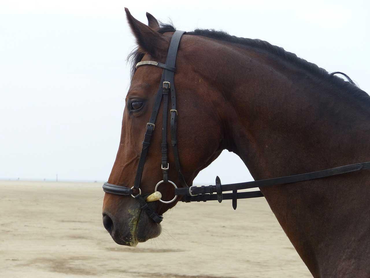 brider et seller un cheval