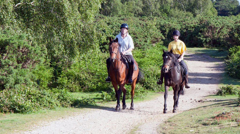 La balade en terrain varié est un excellent moyen de muscler son cheval en douceur