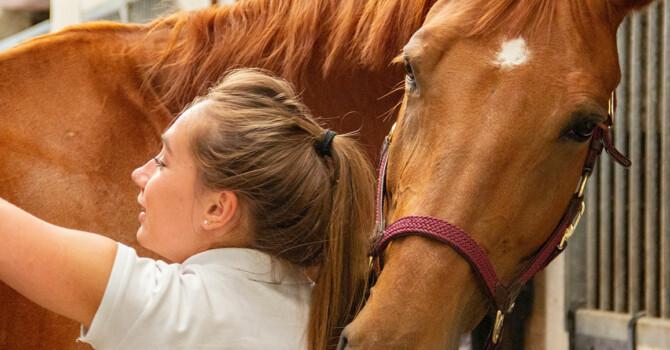 soigner son cheval après une compétition