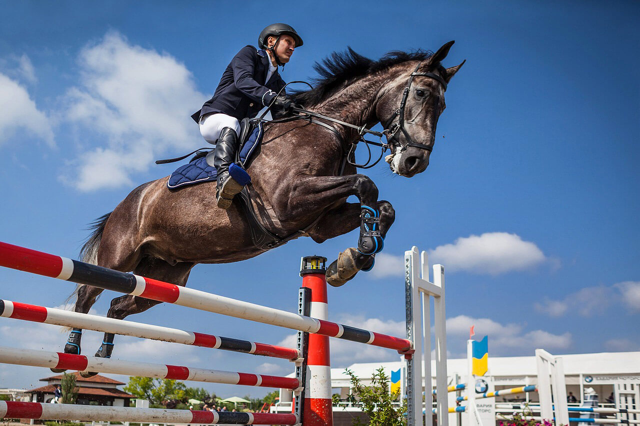 Saut d 39 obstacles comment g rer un cheval qui charge les - Frison saut d obstacle ...