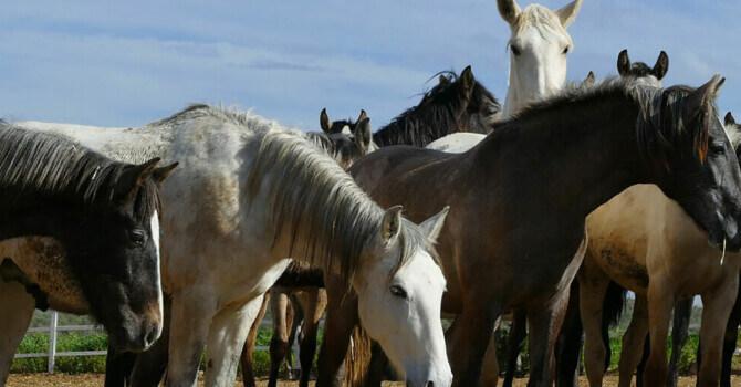 cheval qui maigrit