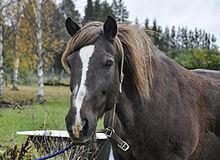 vieux cheval