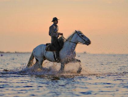 quizz disciplines équitation