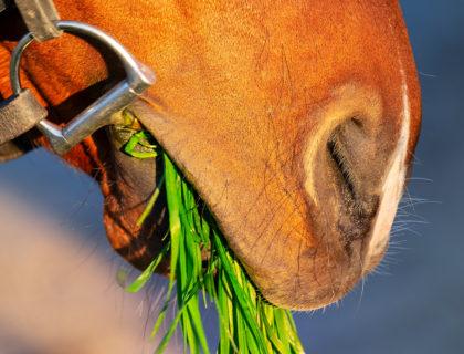 choisir le mors de son cheval : le point sur les différents matériaux