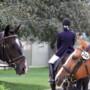 La salivation du cheval est-elle synonyme de décontraction ?