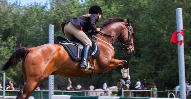 idée d'exercice à l'obstacle pour le cheval