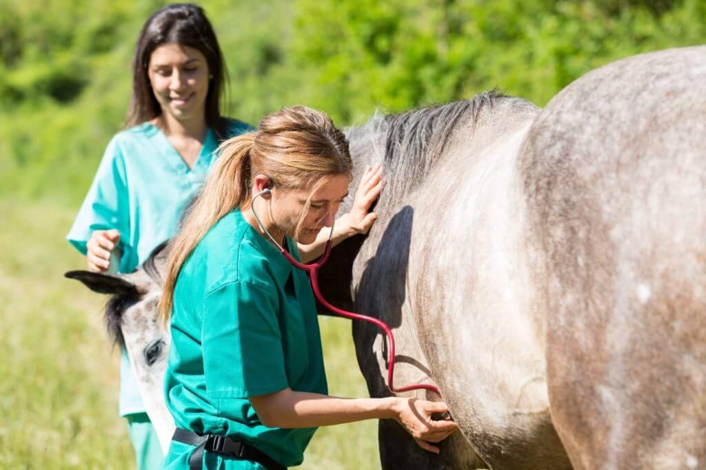 visite d'achat vétérinaire d'un cheval