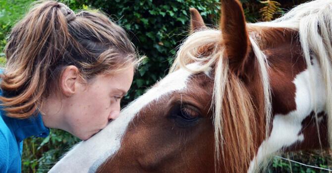 acheter un cheval : que peut-on exiger du vendeur