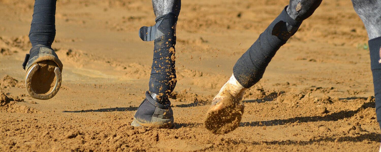 idée d'exercice cheval équitation