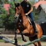 exercices à l'obstacle pour le jeune cheval