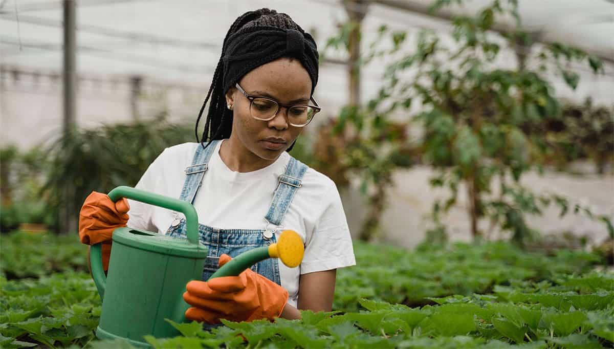 femme qui arrose des légumes de potager