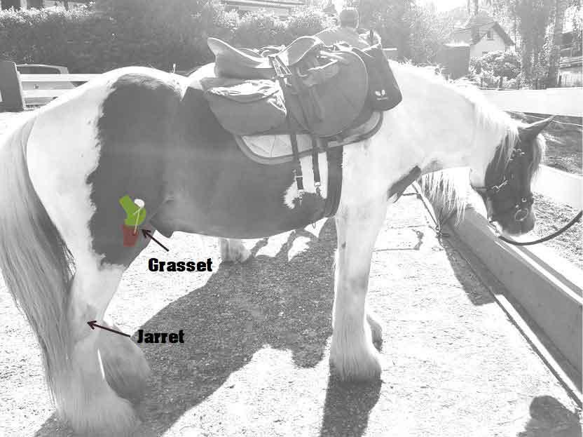 schéma explicatif grasset et jarret cheval