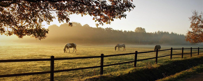 drainage cheval