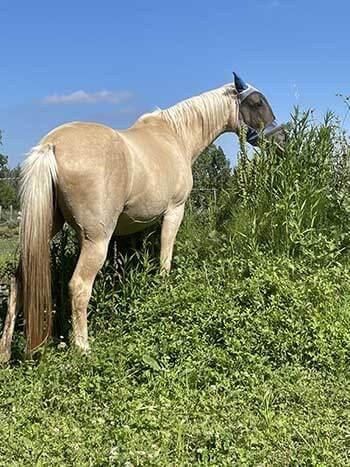 cheval pieds nus